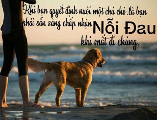 slogan hay về chó