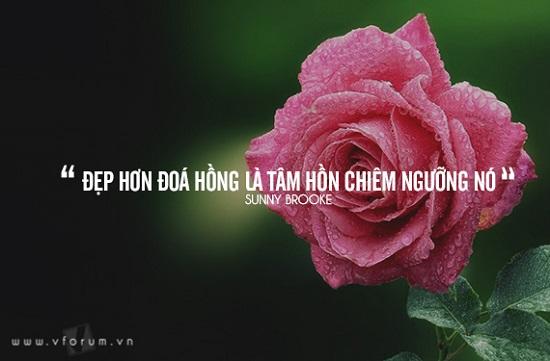 tus hoa hồng