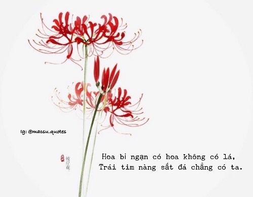 tus hoa